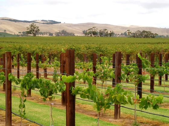 Barossa Valley vineyards in South Australia
