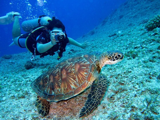 Scuba diver taking photo of a sea turtle underwater