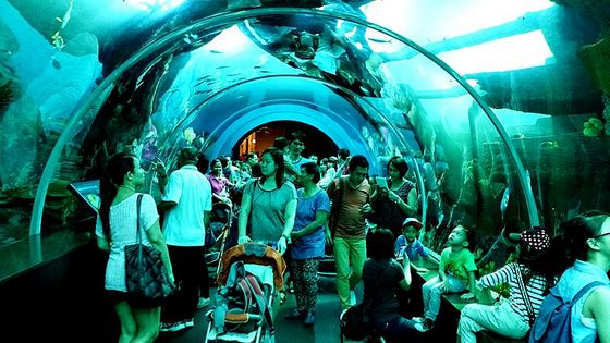 The S.E.A. Aquarium in Singapore