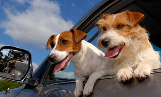 Traveling by car with your pets is the easiest way