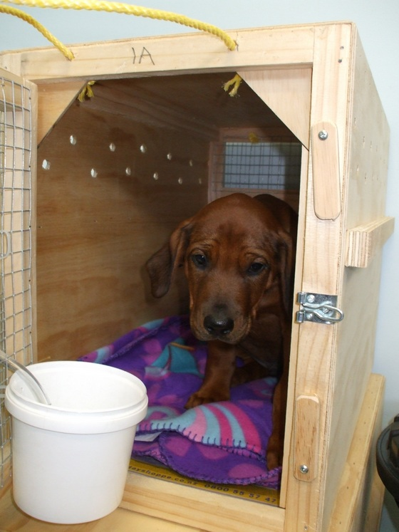 Dog in a wooden crate