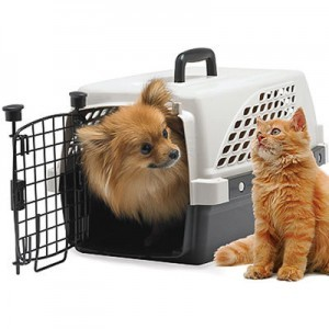 Prepare your pets for travel