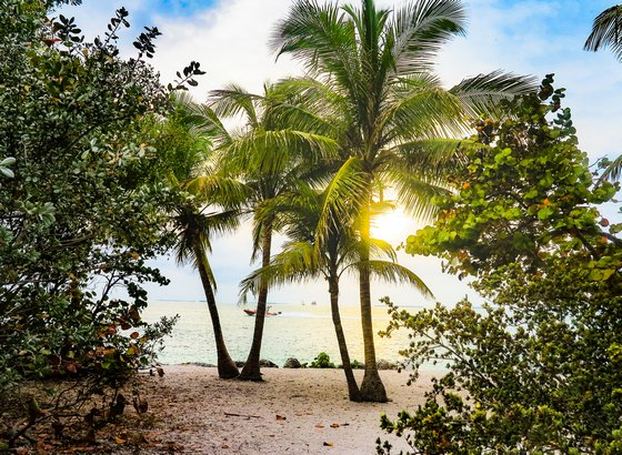 coconut trees on a beach in Florida